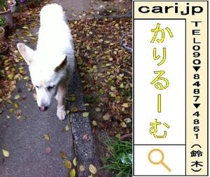 siroinu-111207-0853.jpg